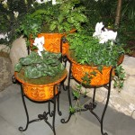 Gardening with Kids: Container Gardens for Kids