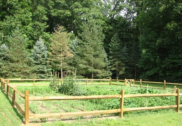 Vegetable garden location