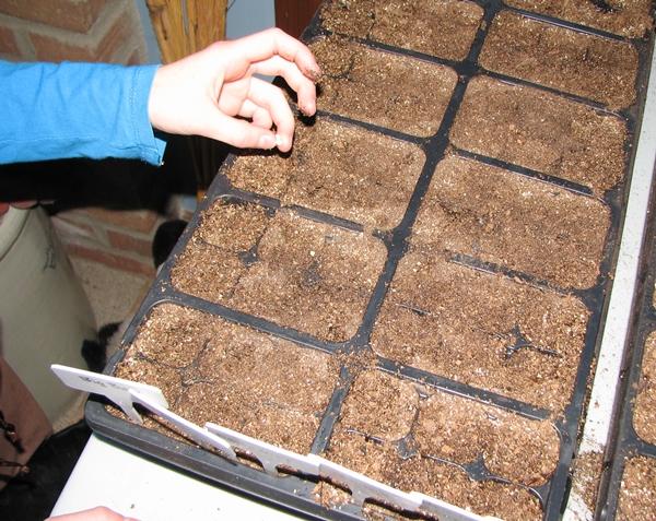 starting seeds planting seeds