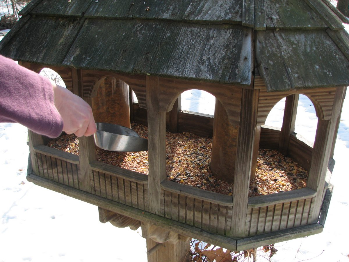 Filling Bird Feeder