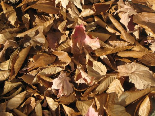 Nature Photography-fall leaves