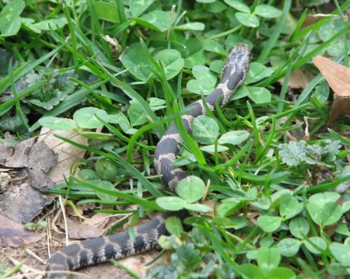 Nature Photography-Snake