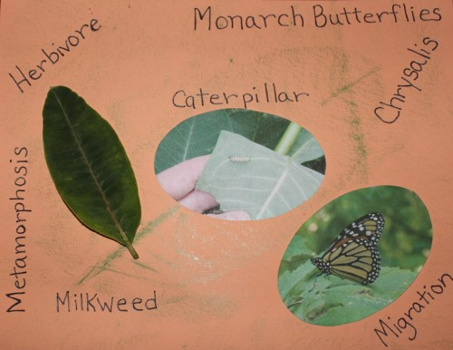 Nature Journal-Monarch Butterflies