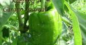 Garden Records: Keeping a Garden Journal