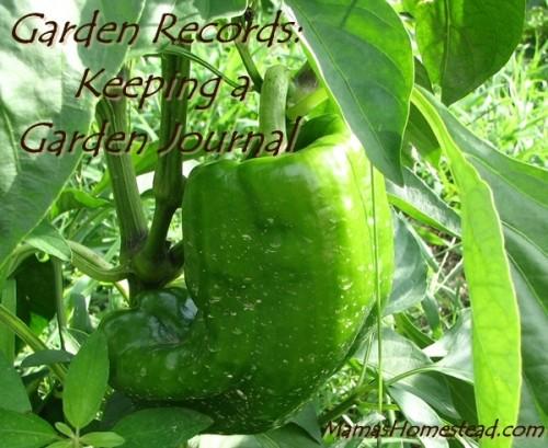 Keeping a garden journal Green Bell Pepper