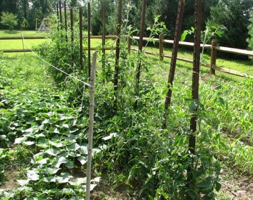 Garden records-tomato stakes