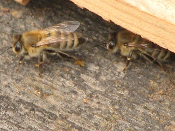 Bee jobs