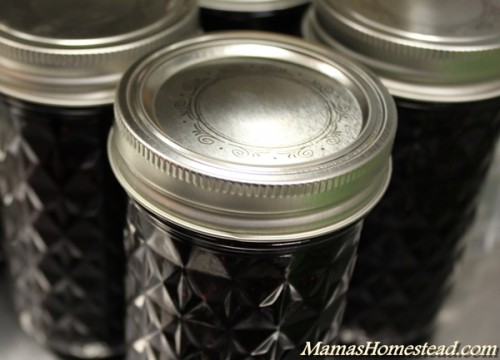 Canning Blueberry Jam