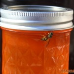 Orange Soda Jelly