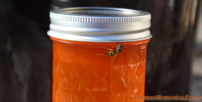 Orange Soda Jelly with Yellow Jacket