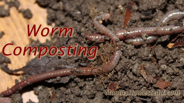 Worm Composting-Red Worms